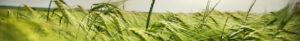 Hydrogeo sfondo erba